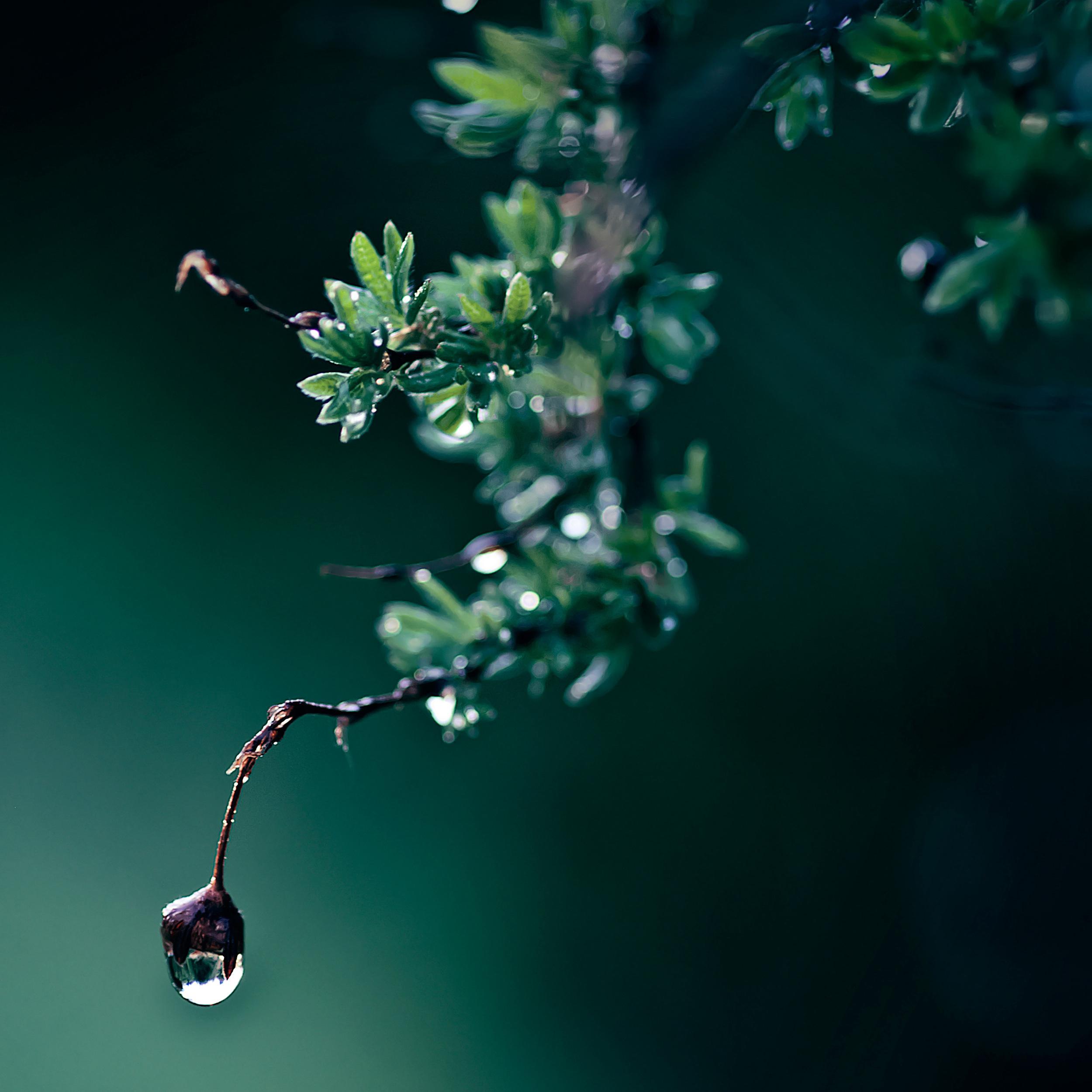 ветка макро зелень цветы скачать