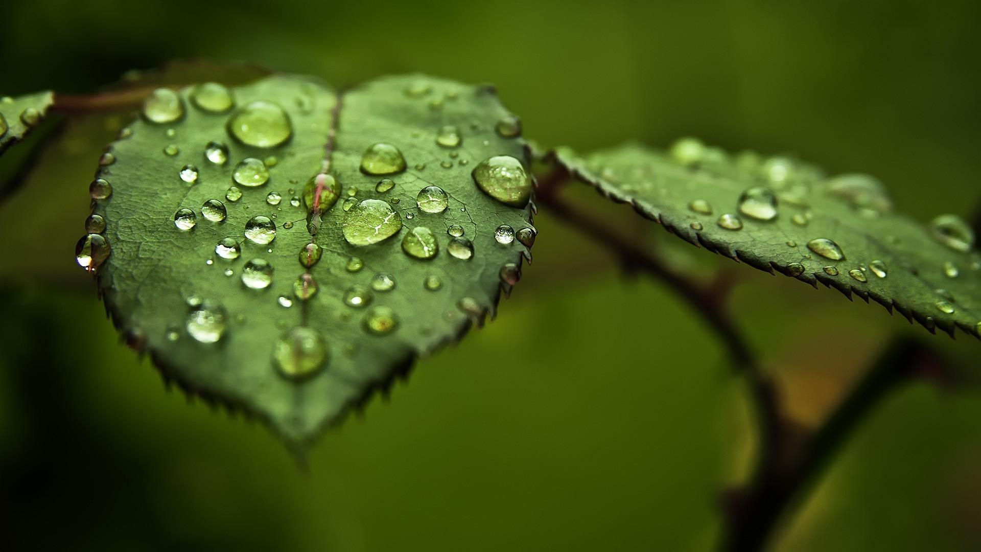 Лист зелень макро смотреть