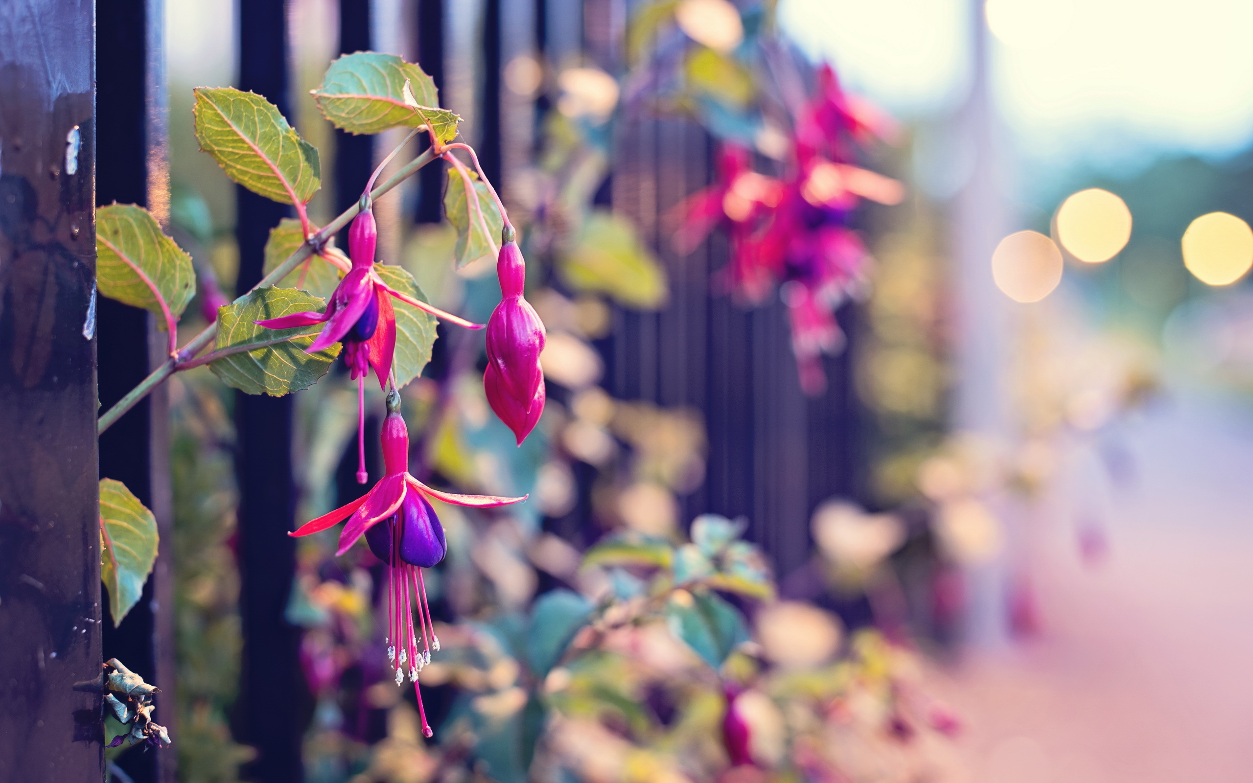 Забор цветы  № 2488757 без смс
