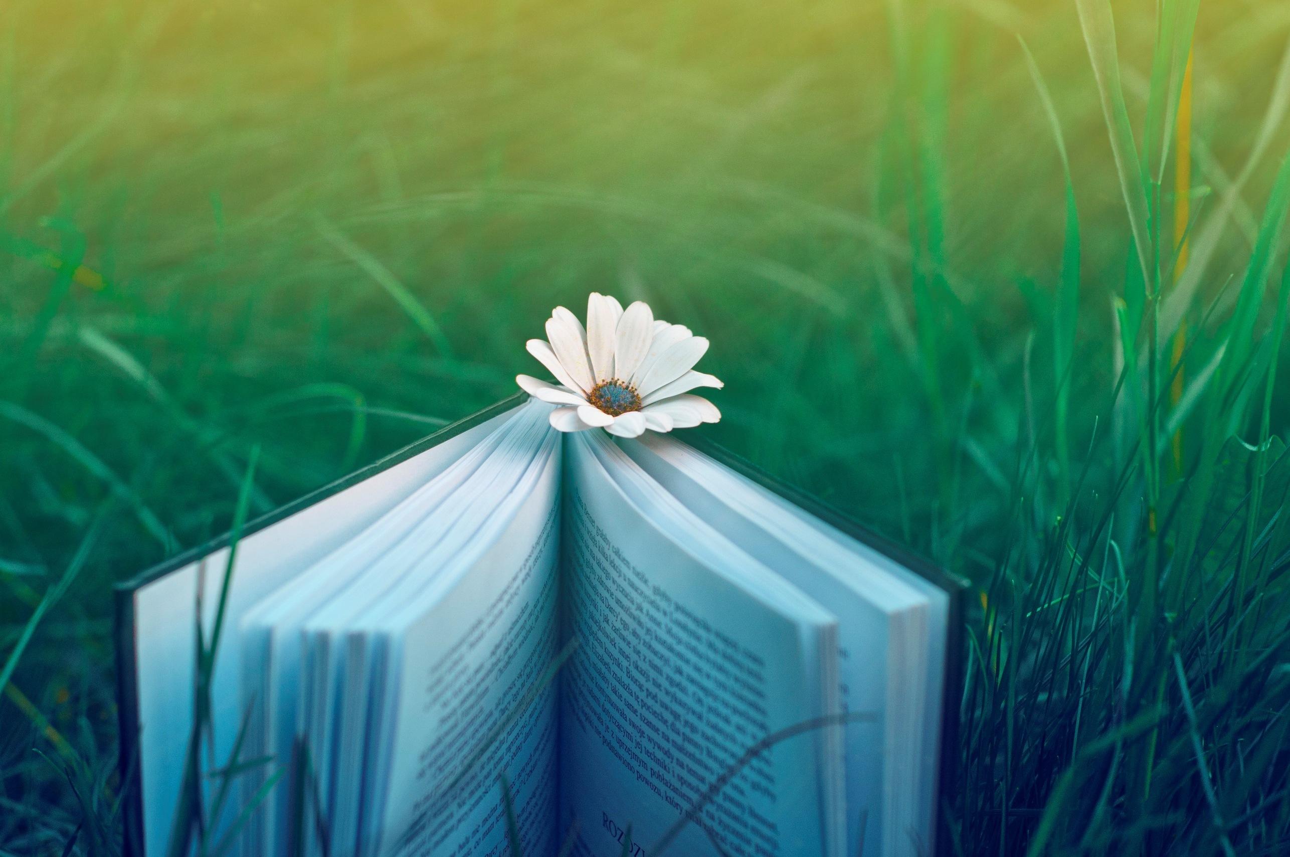книги поле мужчина загрузить
