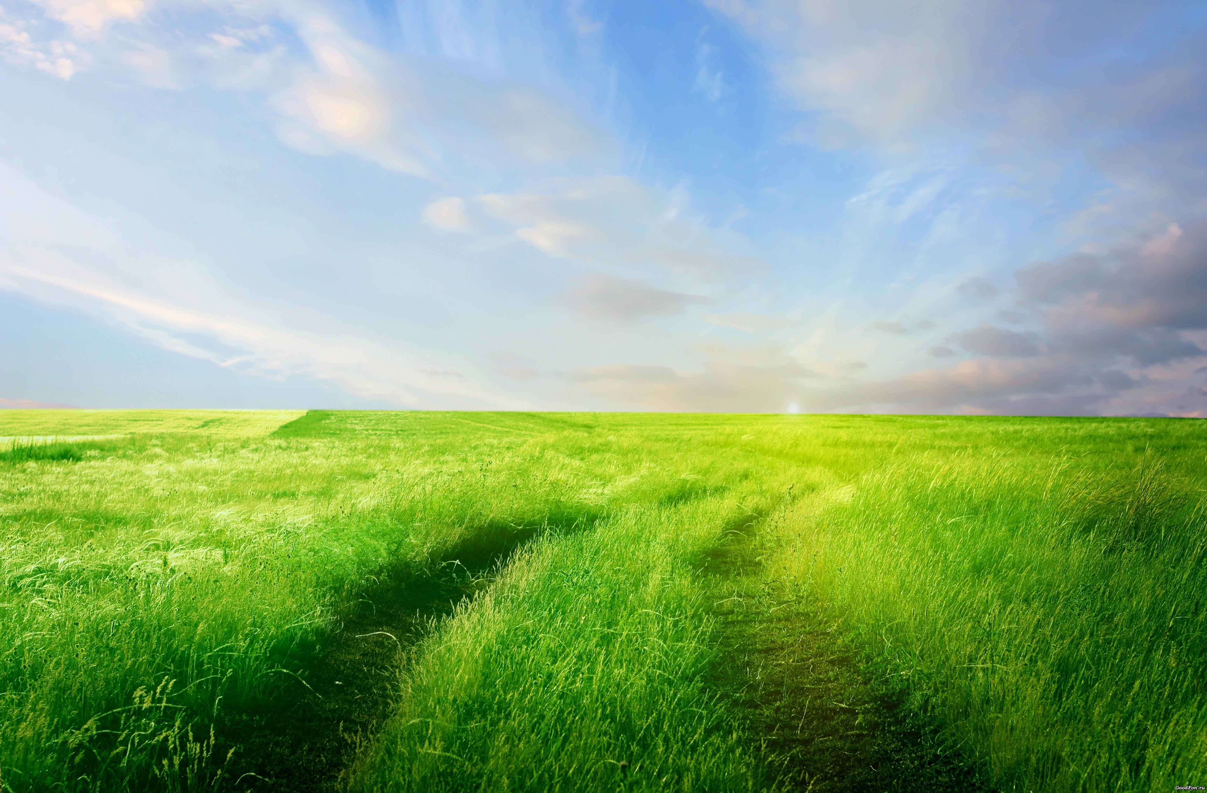 природа облака небо горизонт поле  № 204233 бесплатно