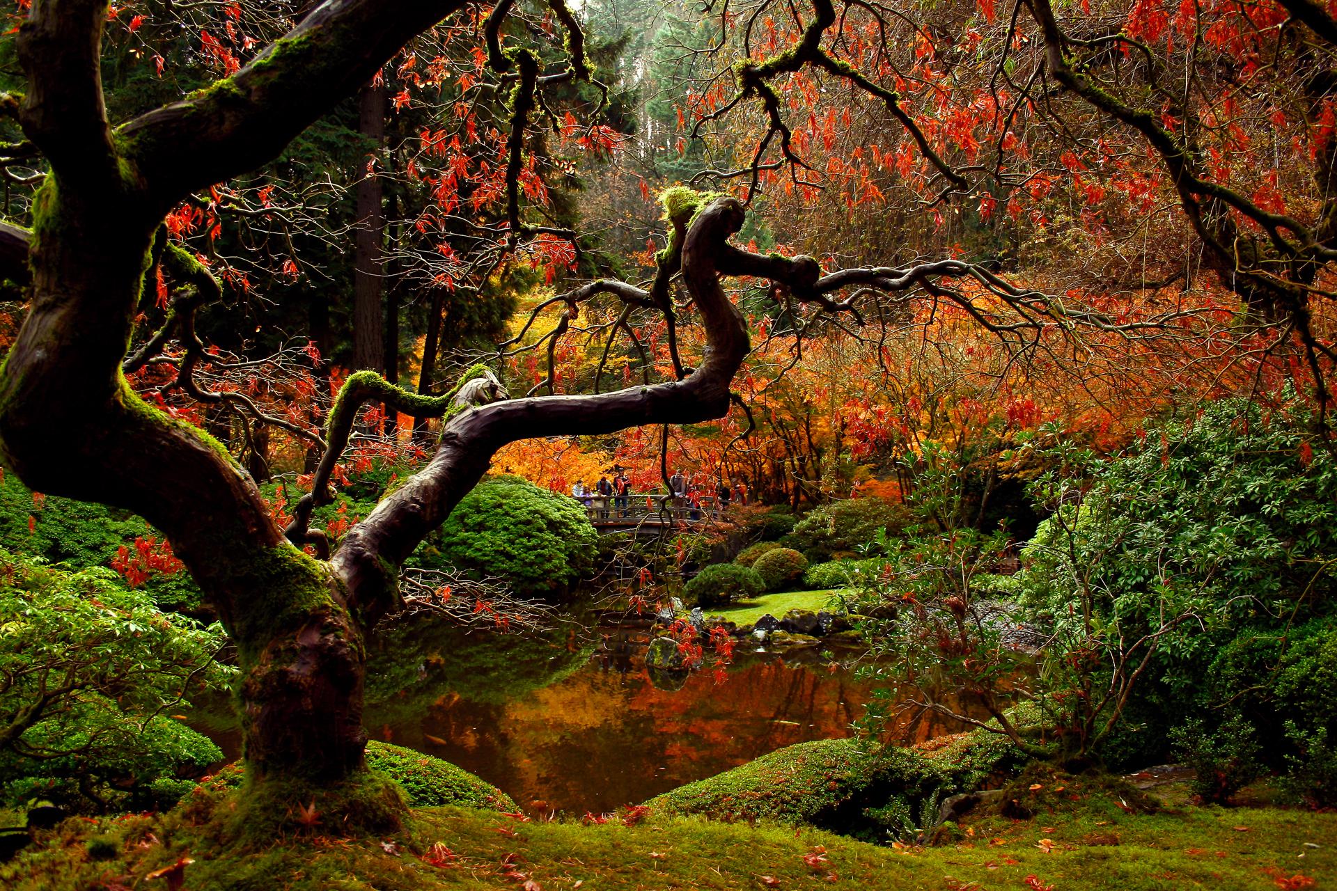 природа мост деревья лес река без смс