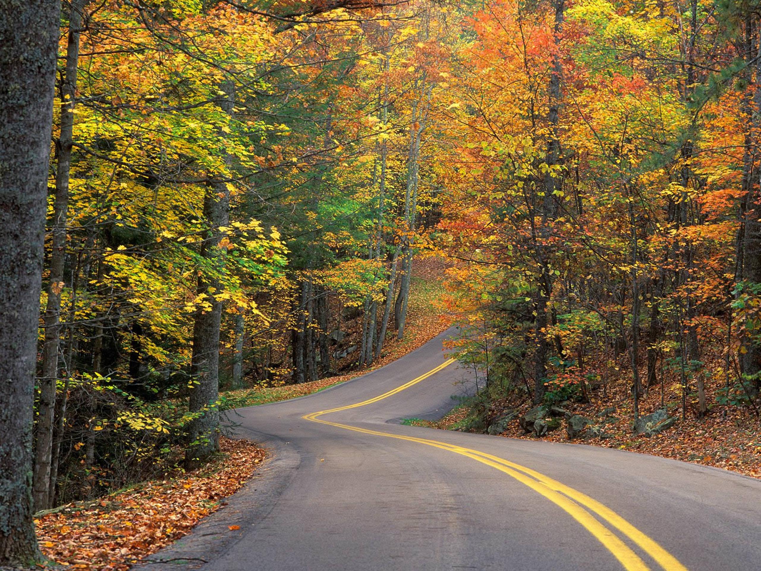 автомобиль осень лес дорога  № 3771440  скачать