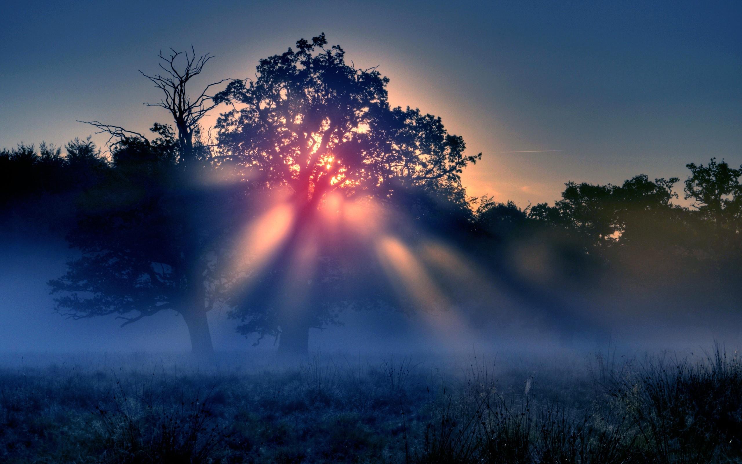 Закат в тумане в лесу скачать