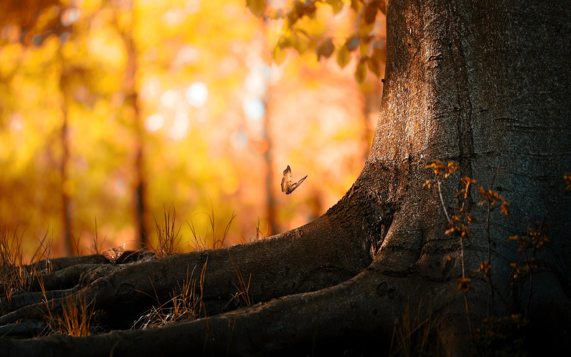 Дерево, бабочки, озерцо бесплатно