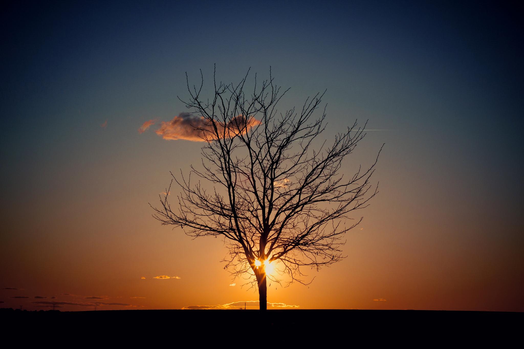 природа горизонт деревья вечер загрузить