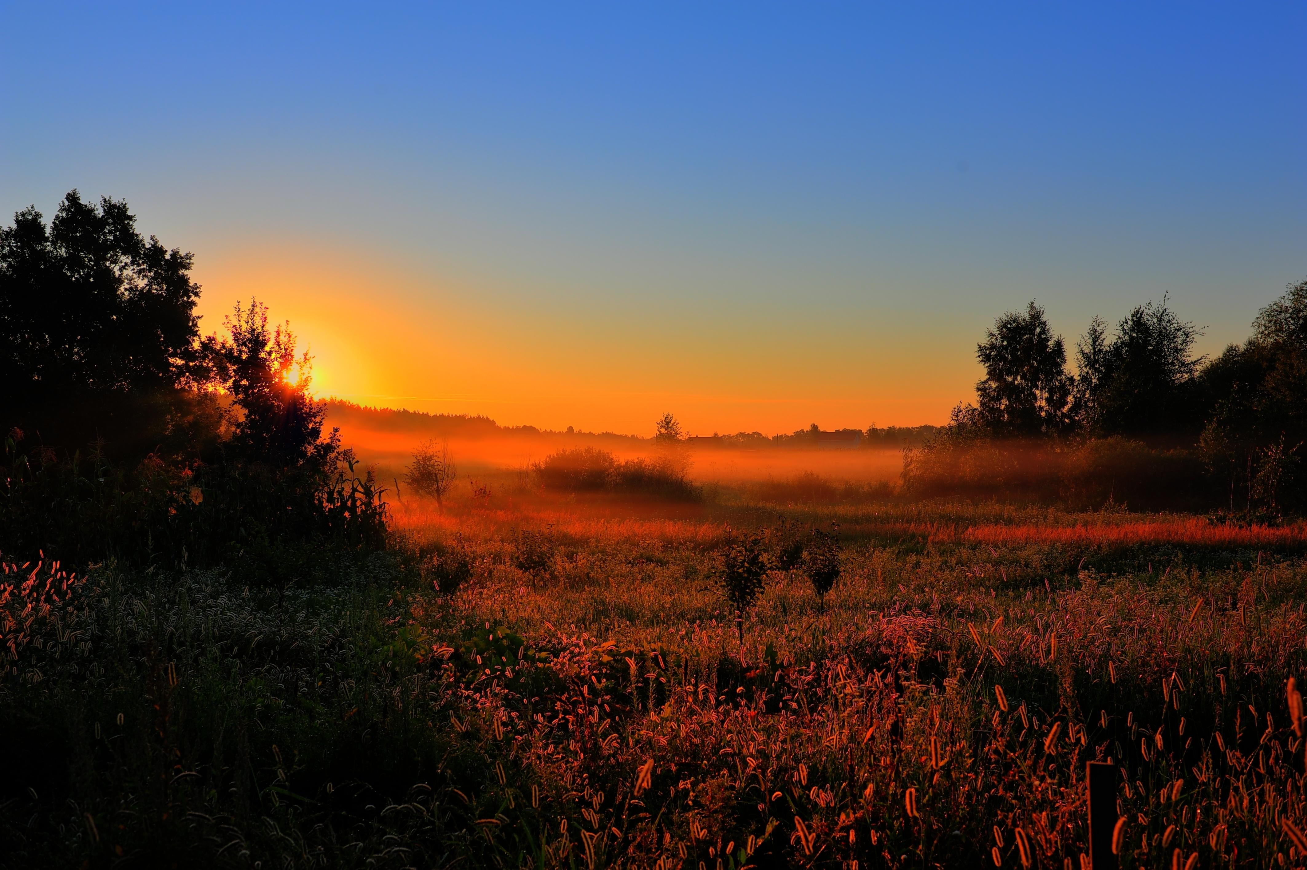 поле туман вечер загрузить