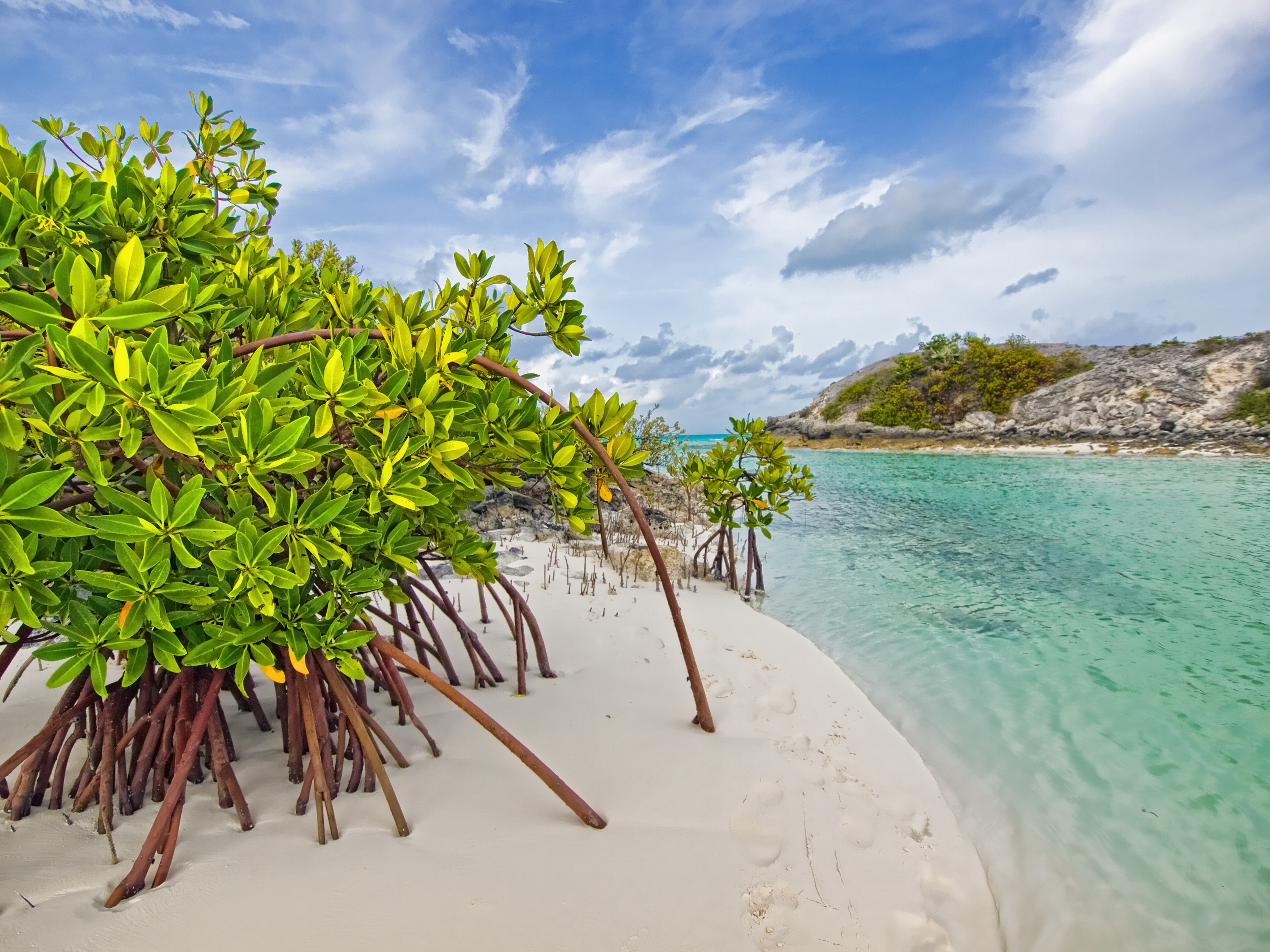 природа море остров деревья загрузить