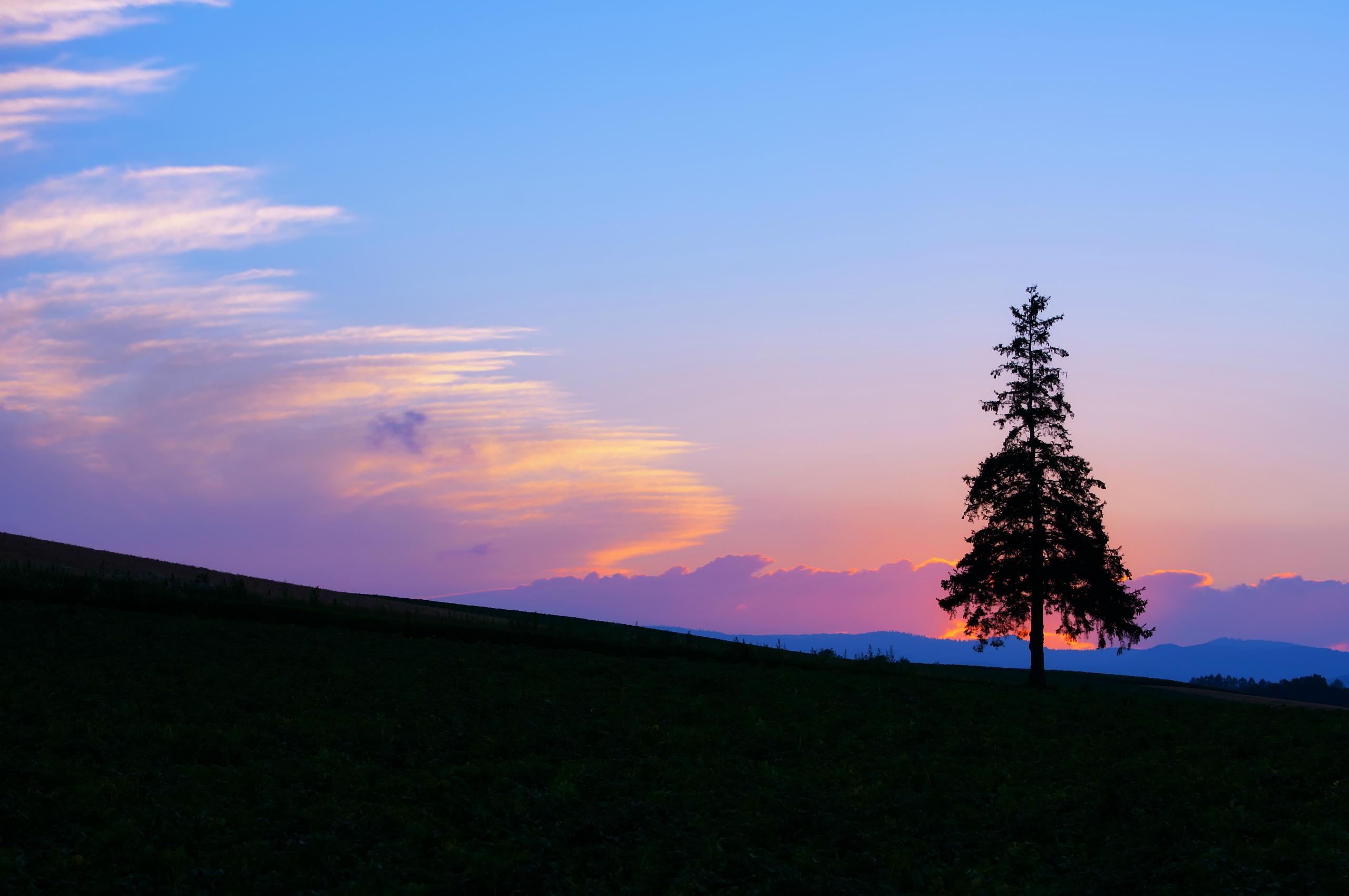 одинокое дерево небо закат бесплатно