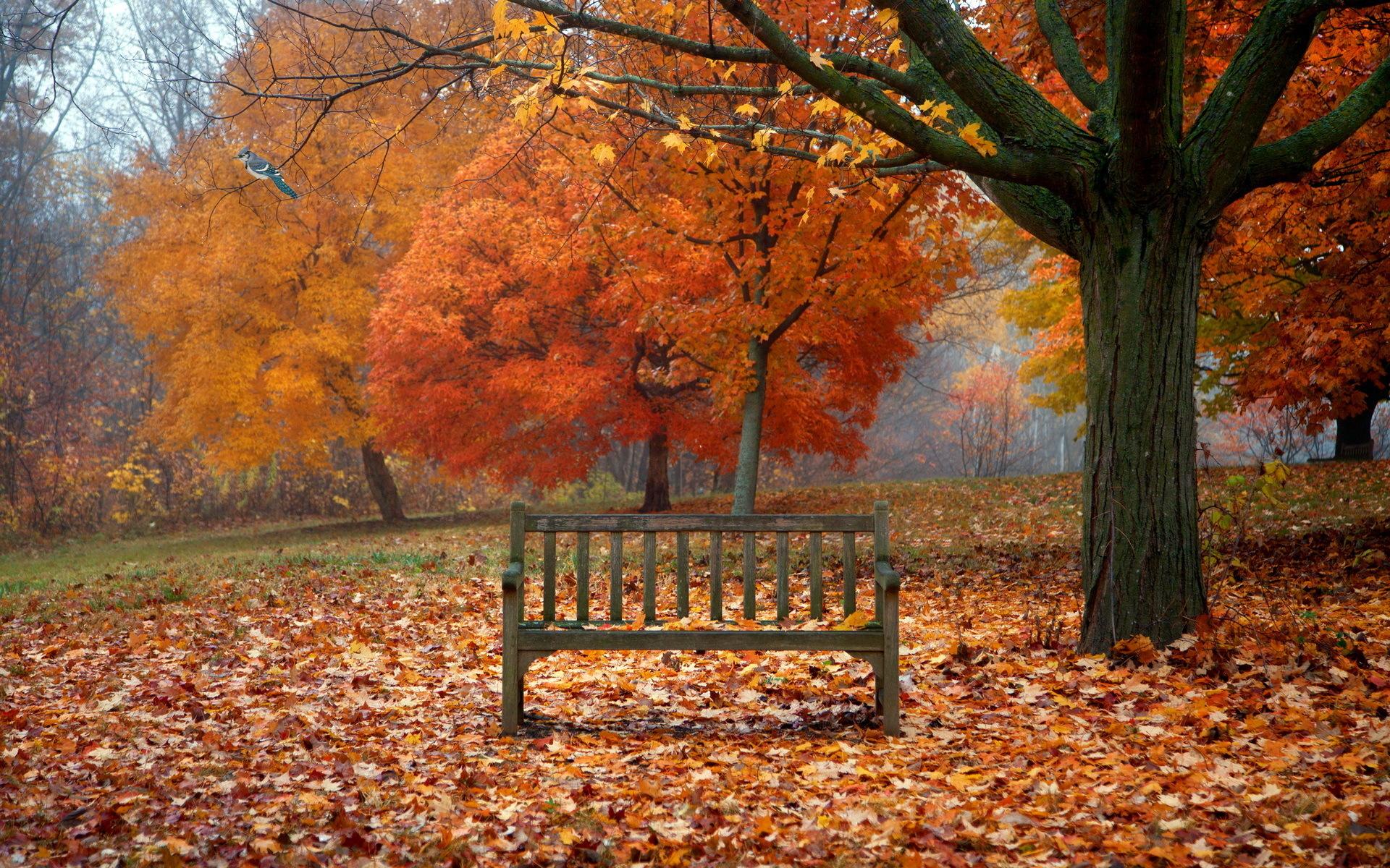 Осень лес парк фонарь листья без смс