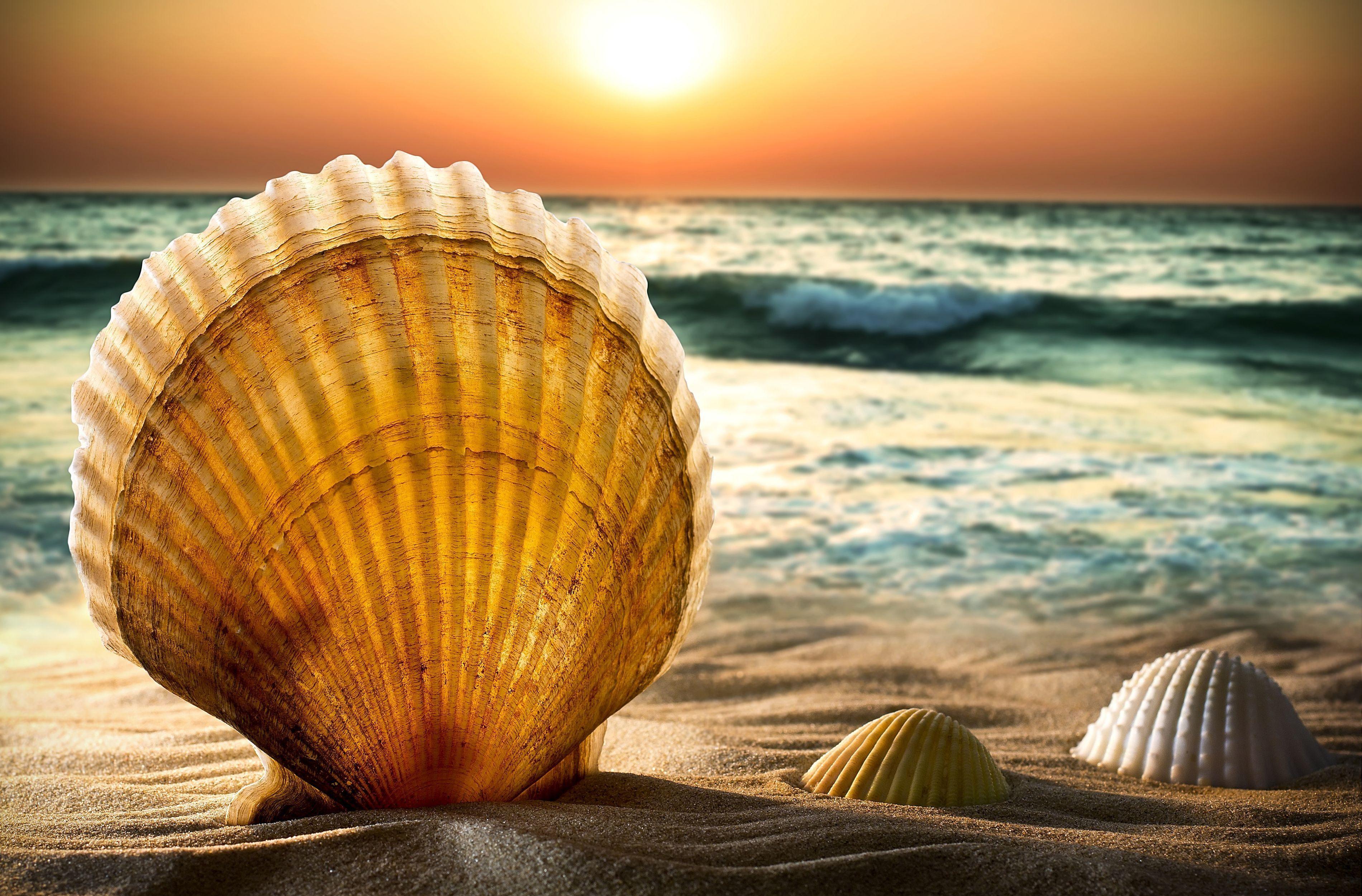 природа ракушка песок nature shell sand  № 1246835 бесплатно