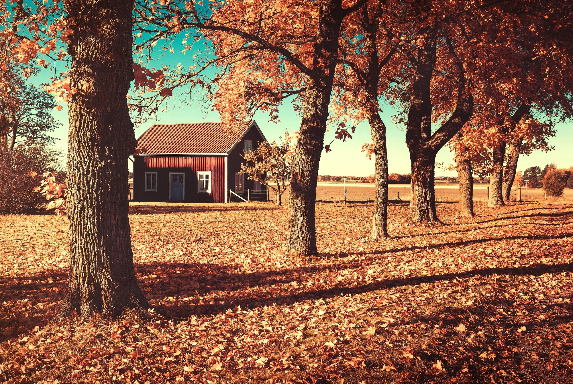 Природа дом осень без смс