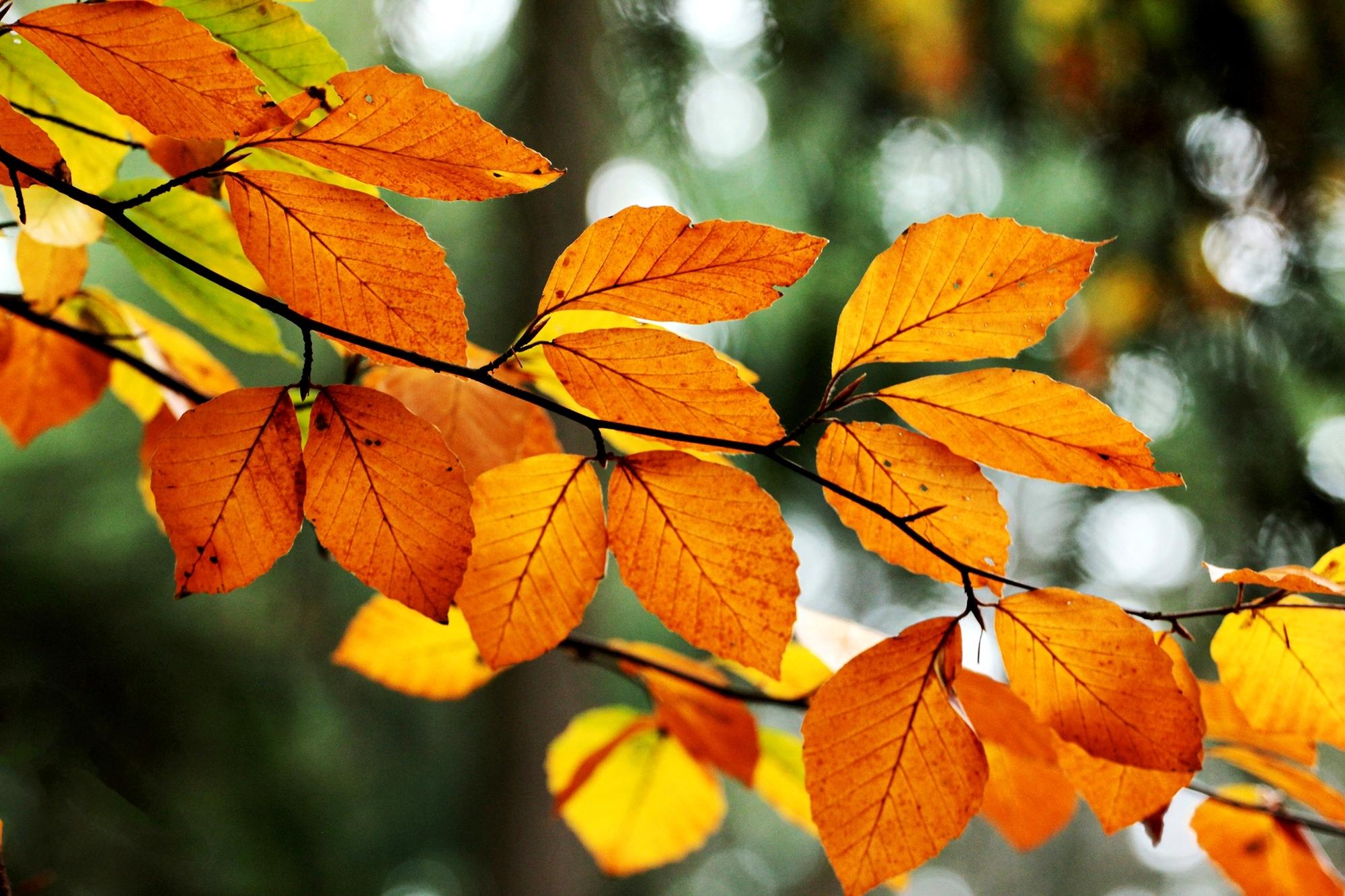 природа деревья листья осень скачать
