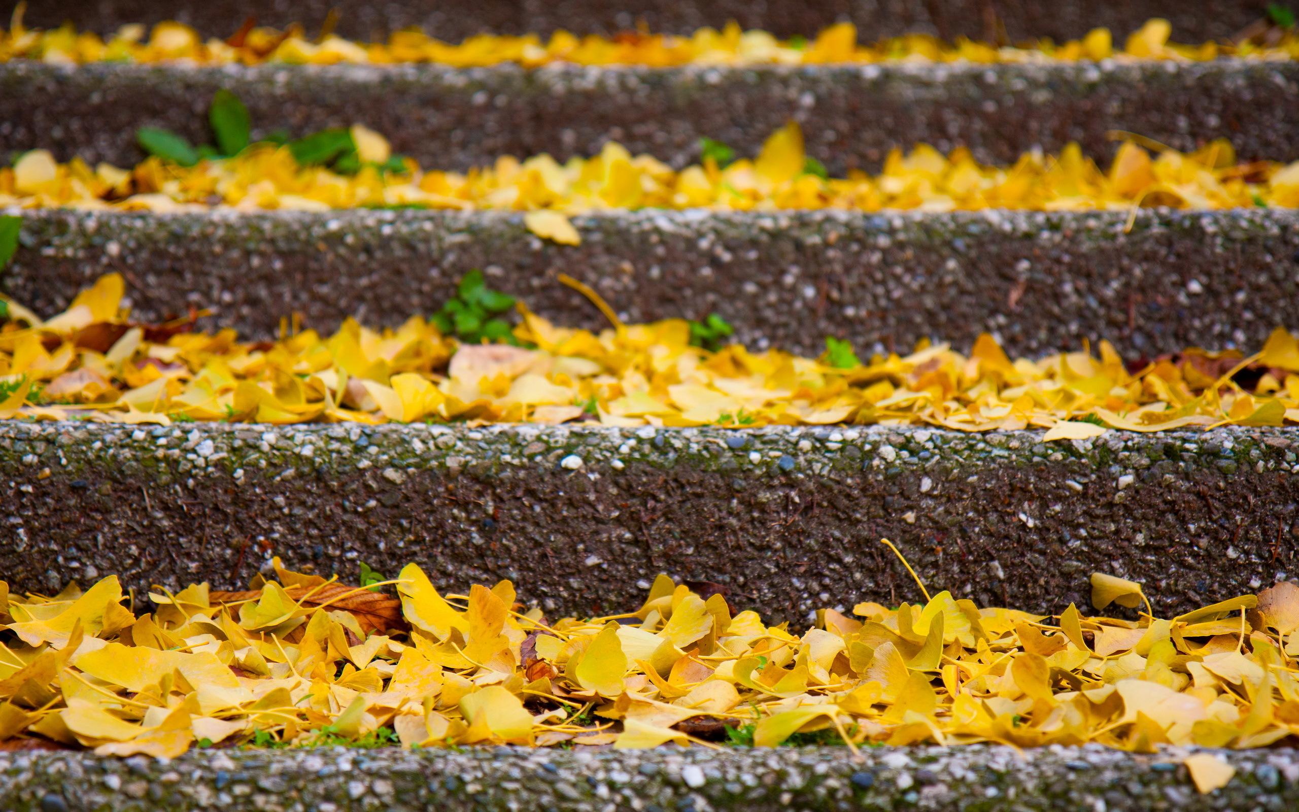 Листья ступеньки осень бесплатно