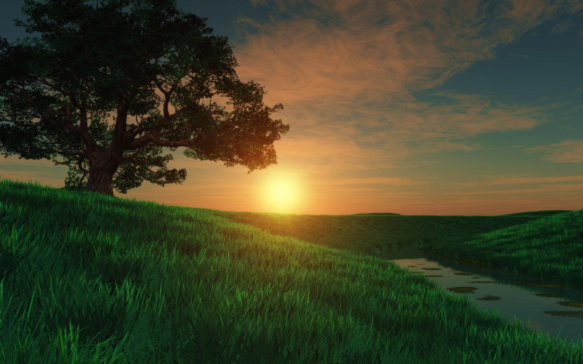природа березы трава деревья закат nature birch grass trees sunset  № 1278559 без смс