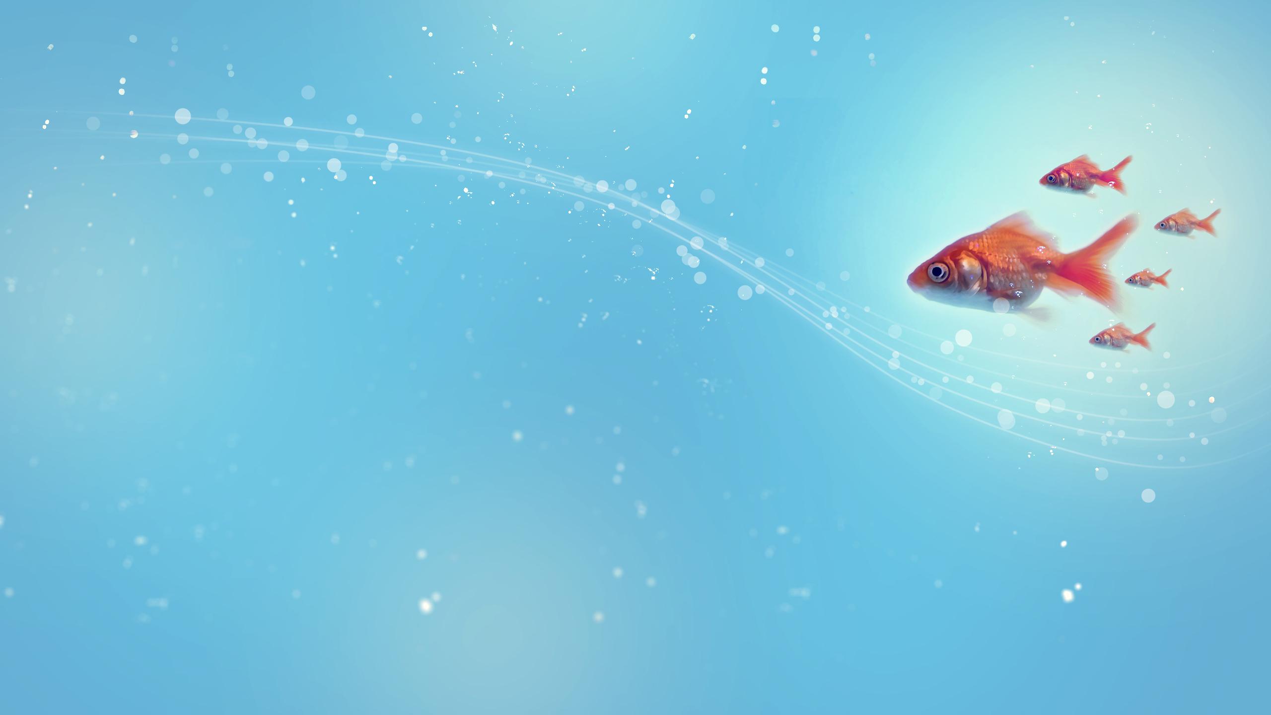 Золотые рыбки на поверхности  № 2075912  скачать